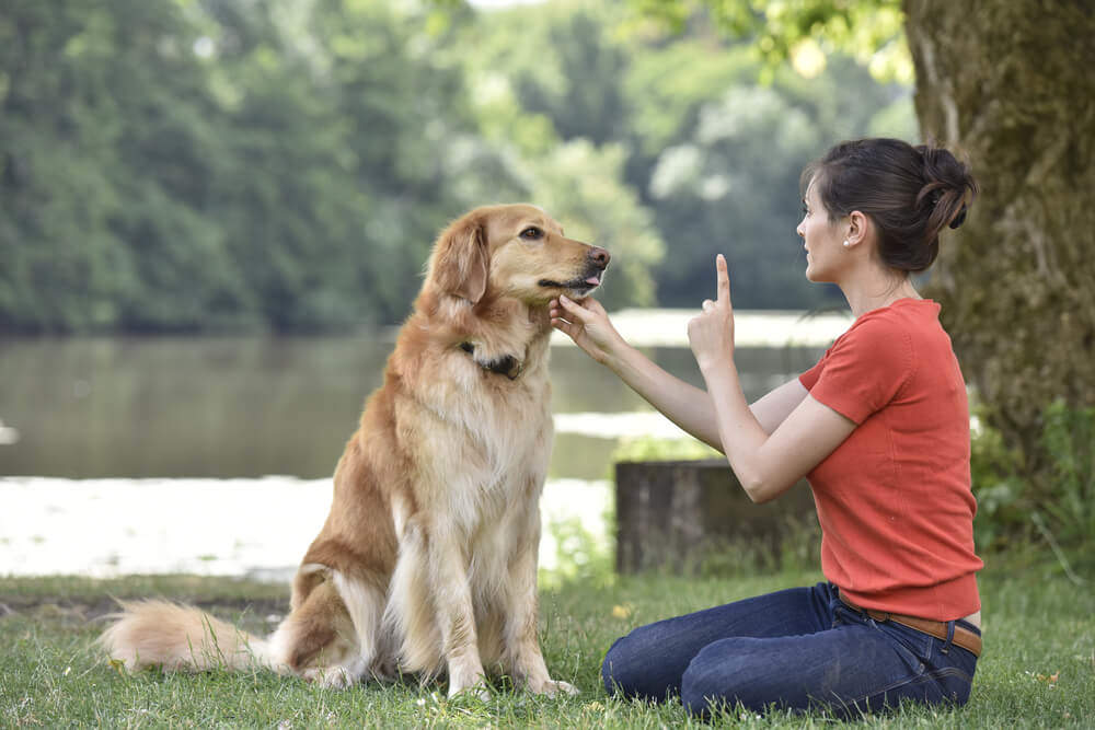 Pet Sense College | Correspondence Pet Courses